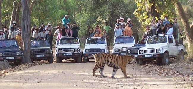 Изнасилование на глазах у тигров