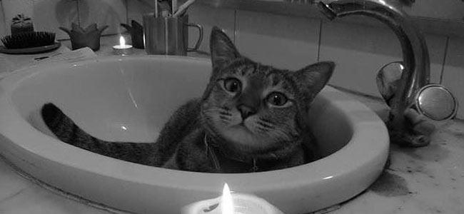 cat-passenger