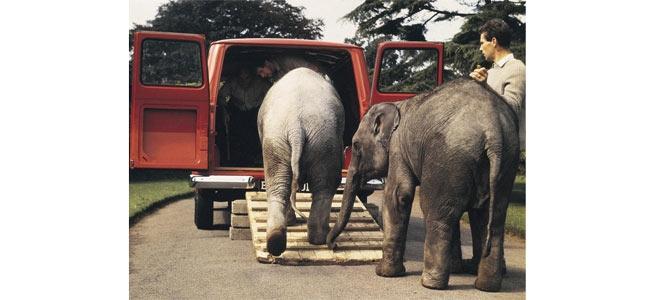 Из-за туристического бума в Таиланде буйно расцвела контрабанда слонов