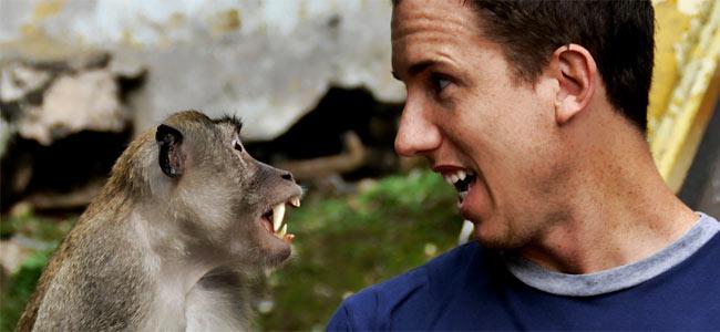 monkey-attack