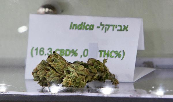 Трава в Израиле