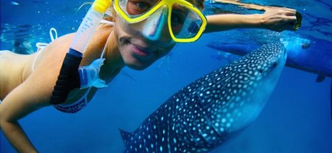 eilat-shark