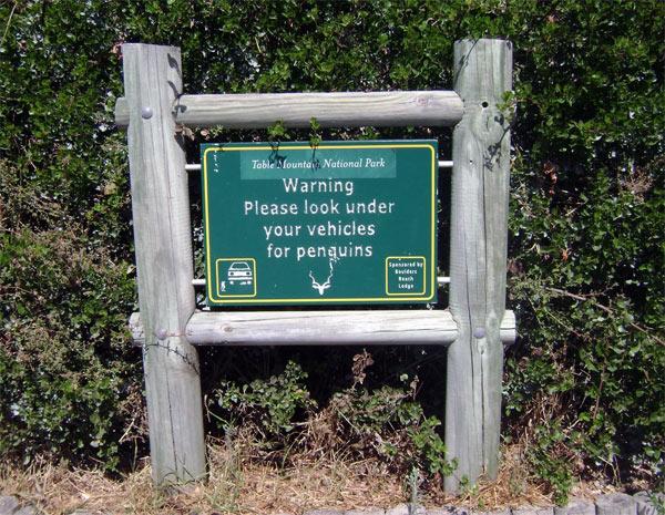 Осторожно пингвины на дороге
