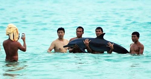 Китайцы издеваются над дельфином