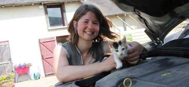 Котенок выжил, проехав 200 км по Франции в… двигателе автомобиля