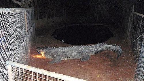 Великодушный крокодил Фэтсо