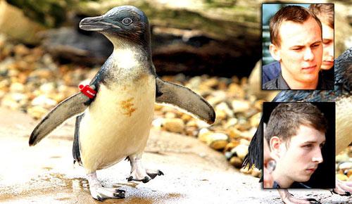 Кража пингвина из зоопарка