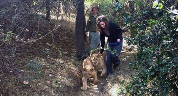 Лев покусал молодую туристку
