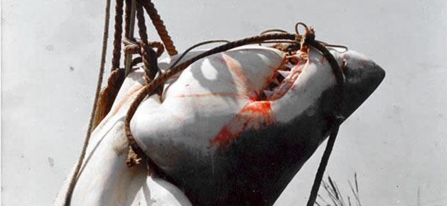 За Реюньон без людоедов. Французские власти решили убить 90 акул в водах курортного острова