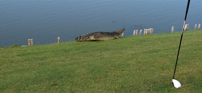 crocodile-golf