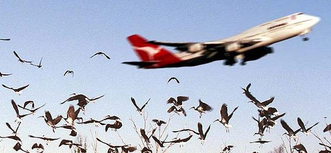birds-and-plane