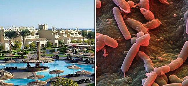 egypt-bacteria