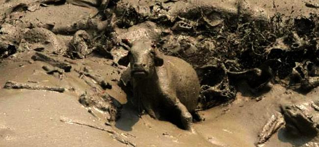 Наводнение в Непале начало убивать иностранных туристов