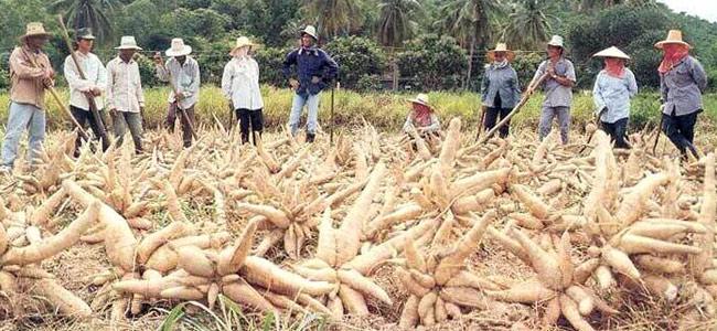 Китайские дельцы убивают друг друга в Камбодже из мести?