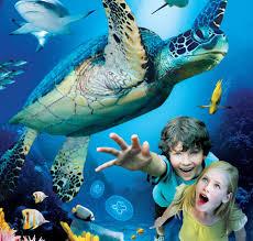 Испанский «морской зоопарк» привлечет 100 тыс. туристов