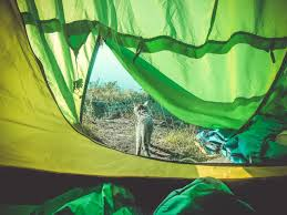 Челябинский котенок-турист вместе со своими хозяевами  покорил несколько горных вершин