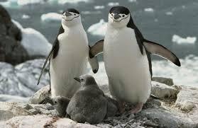 Аргентина предлагает экзотическую экскурсию в колонию магеллановых пингвинов