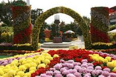 Корейские фестивали хризантем традиционно привлекают туристов из разных стран