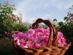 Болгария – страна благоухающих роз