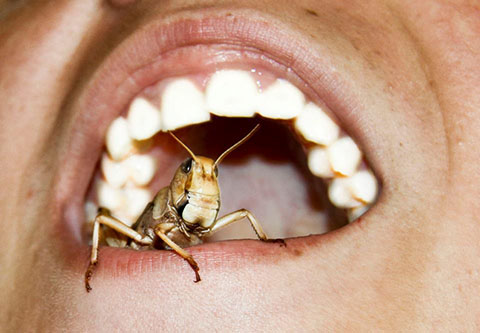 Новая Зеландия приглашает поесть тараканов