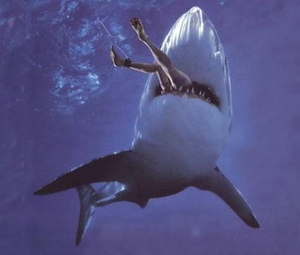 Акулы в Египте нападают на туристов