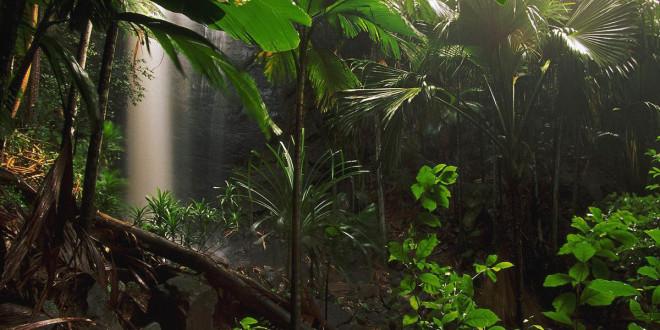 Величественные африканские джунгли
