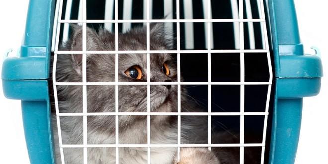 США: во время авиаперелета потеряли кота