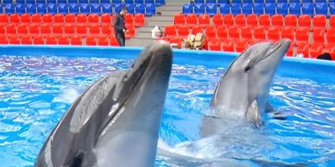 В Сочи открылся новый дельфинарий