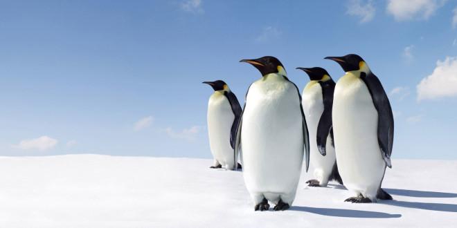 Пингвины-геи сменили место жительства