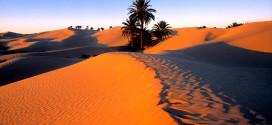 Тунис собирается развивать собственный туризм
