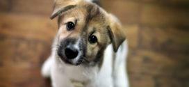 Вьетнамцев попросили не есть мясо домашних животных