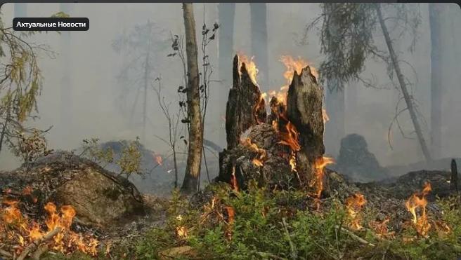 Два отеля и четыре виллы эвакуировали в турецком Мармарисе из-за лесных пожаров